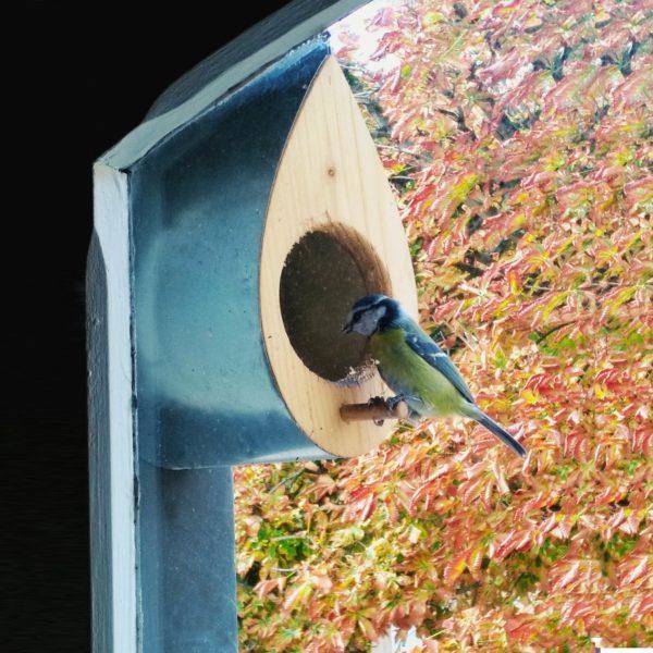 Mangeoire à oiseaux moderne en bois et métal - La Mangeoire